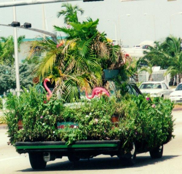 plantcar1a.jpg
